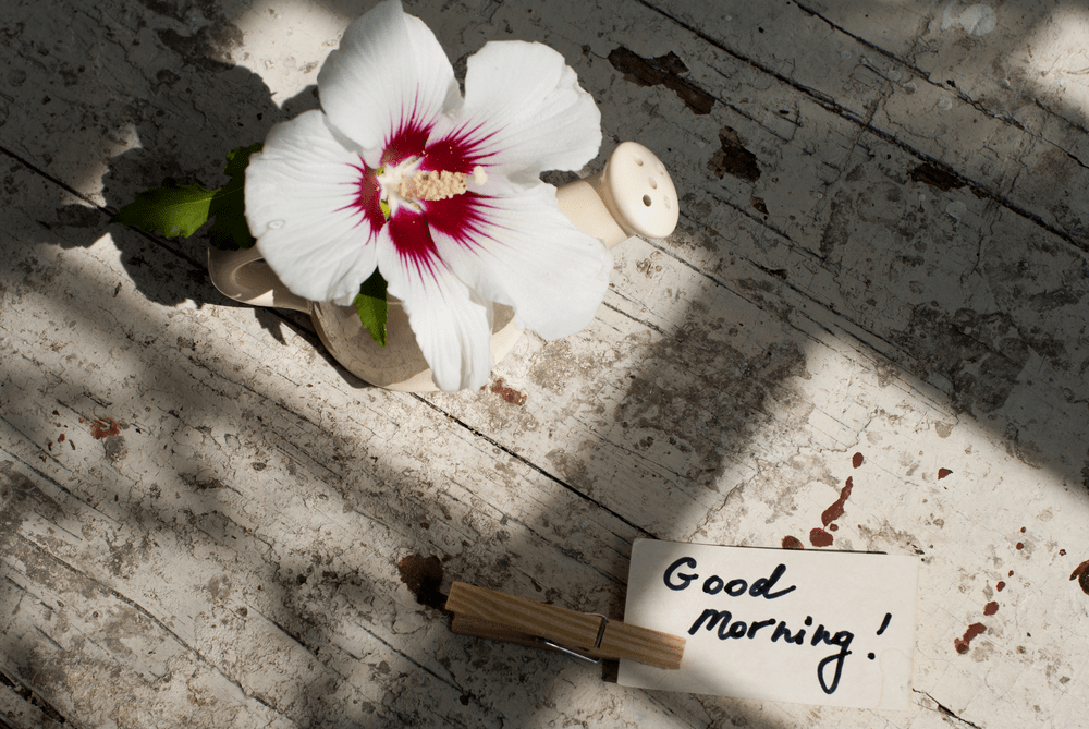 good morning images with nature and flowers