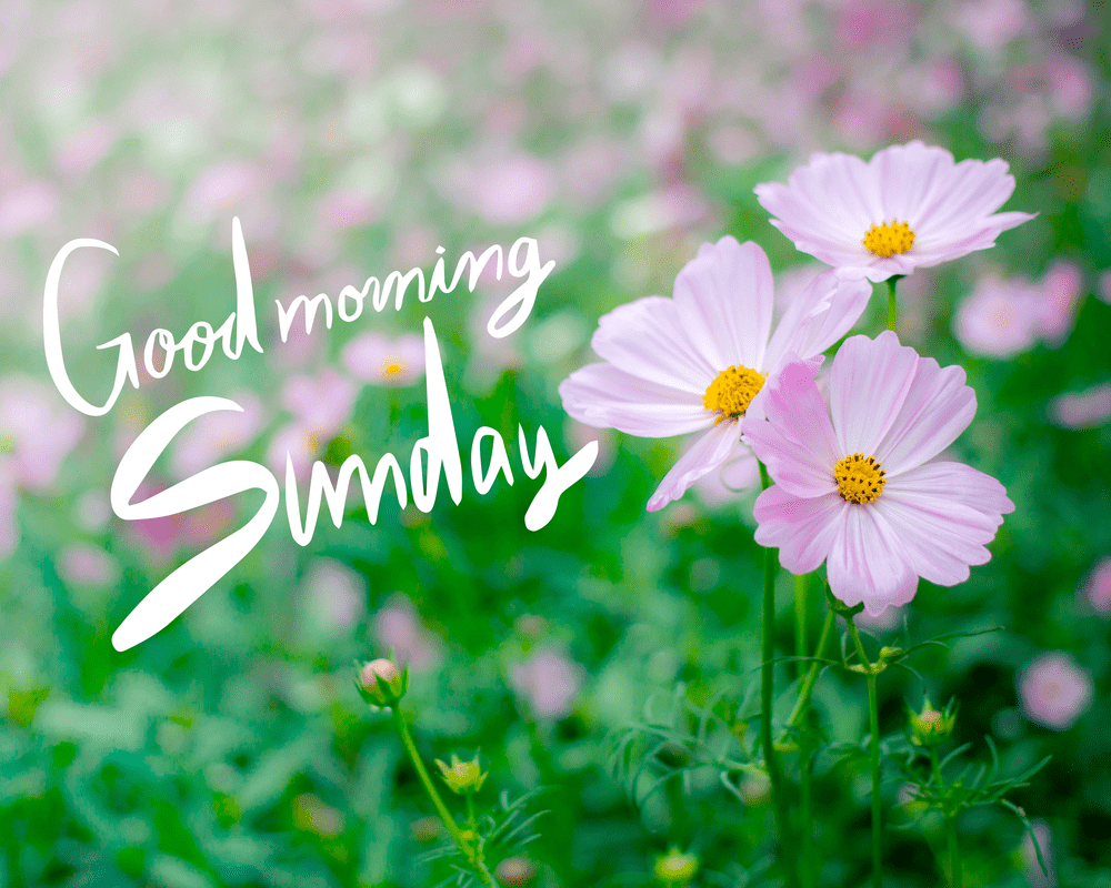 [June Update] Most Beautiful 100+ Good Morning Sunday Images