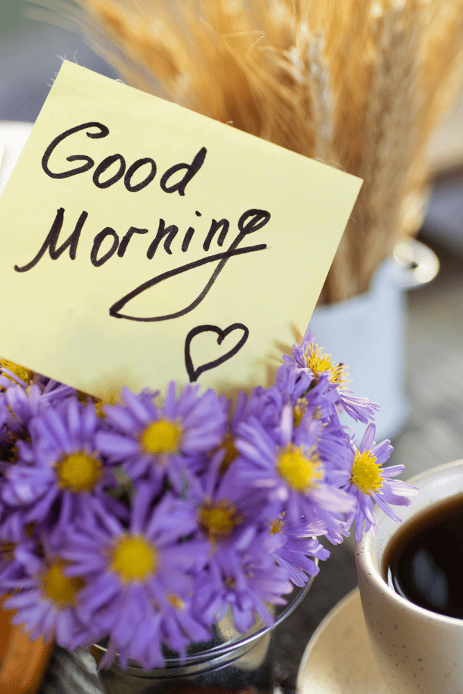 images of flowers with good morning wishes