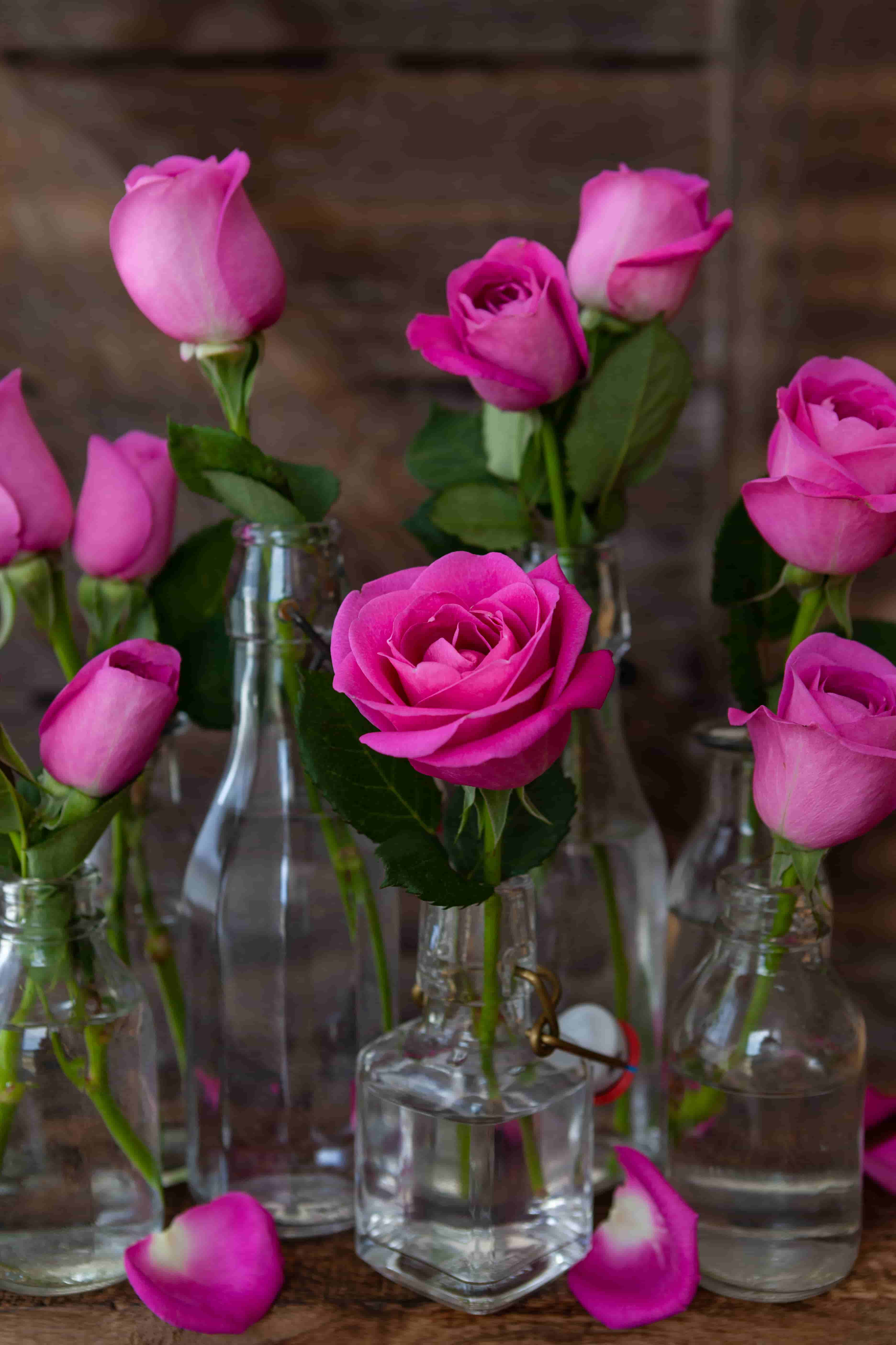 Lush of pink rose images in hd