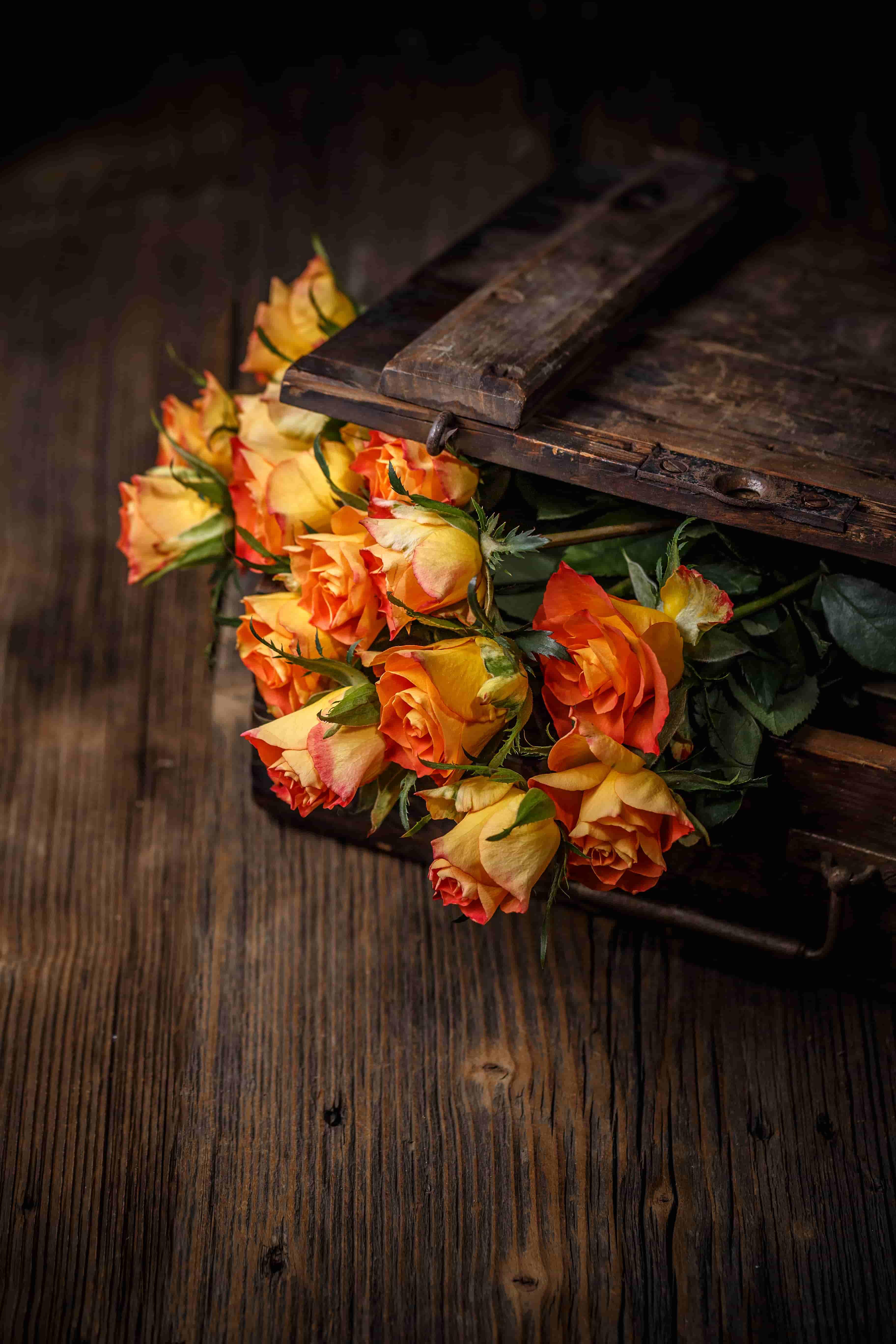Orange Rose images