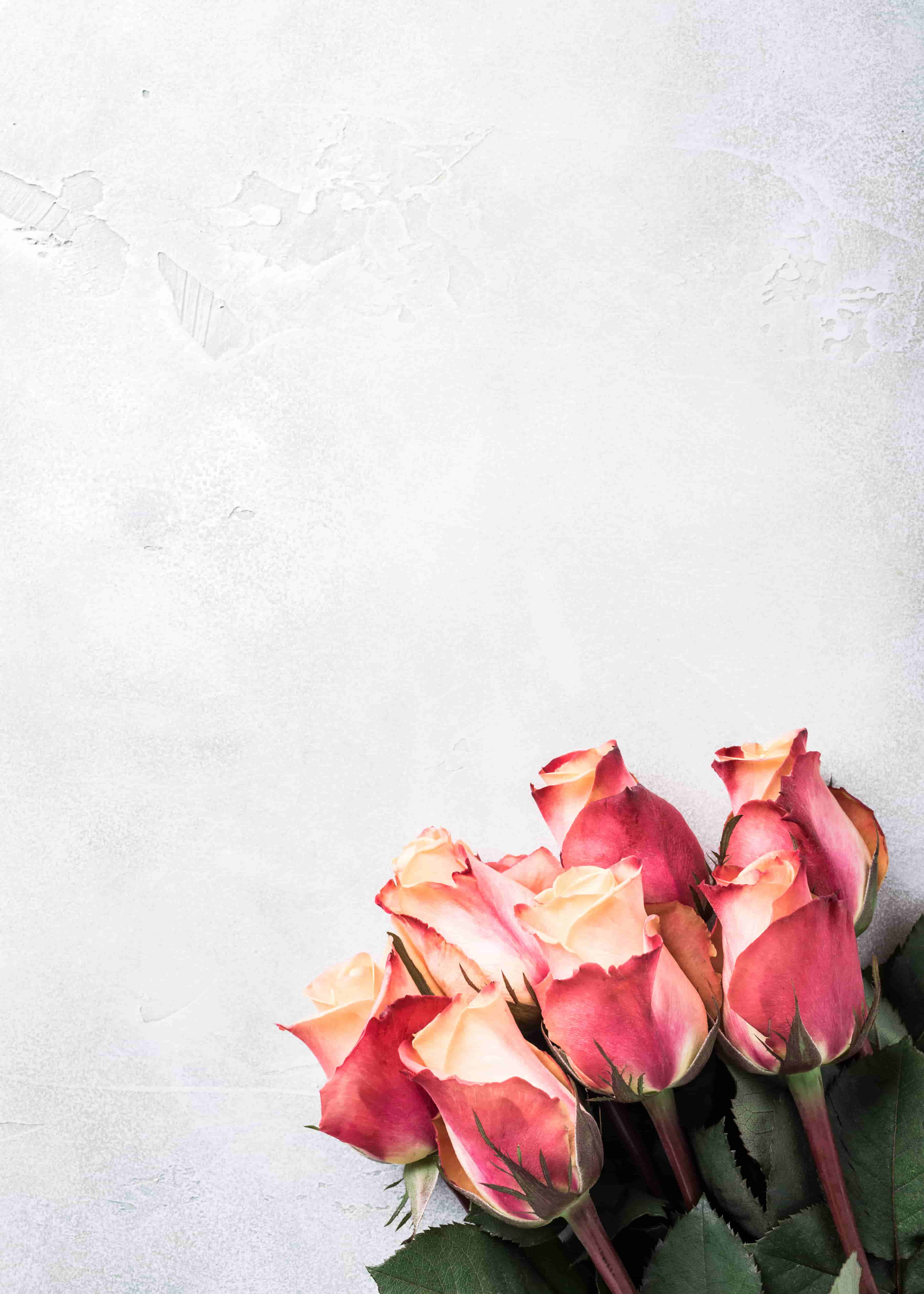 beautiful pink roses image